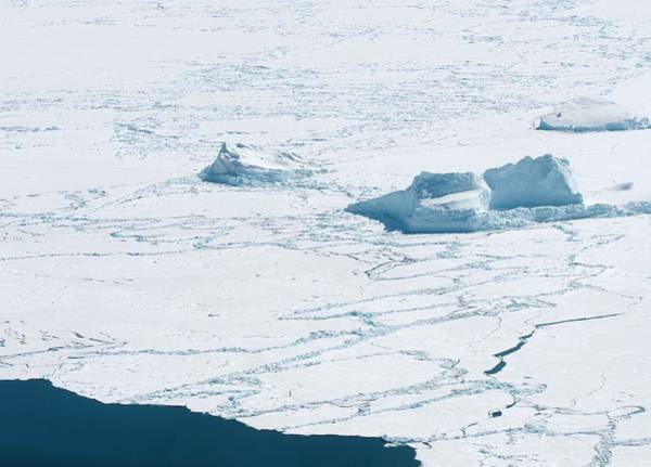 Ice Floe Photograph - Melting Sea Ice by Louise Murray/science Photo Library