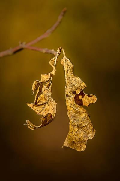 Photograph - Memento Mori by Robert Mitchell