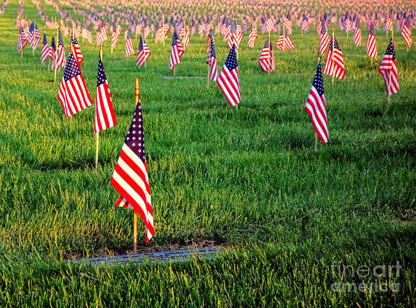 Homage Photograph - Memorial Day by Olivier Le Queinec