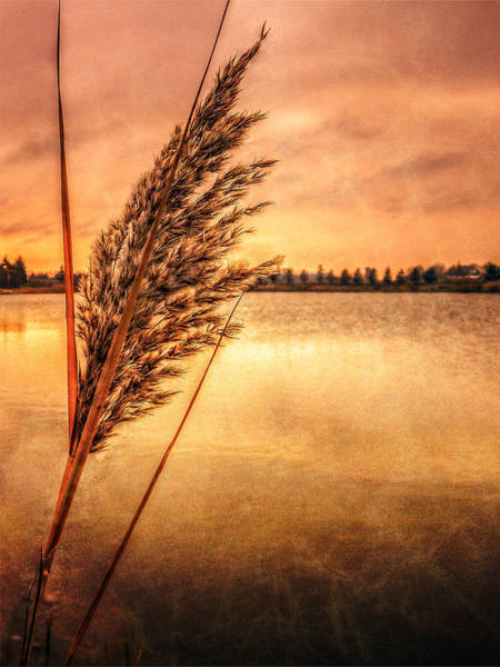 Photograph - Memories Of Fall by Garvin Hunter