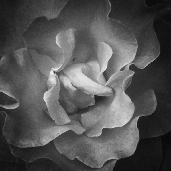 Photograph - Memory by Roxy Hurtubise