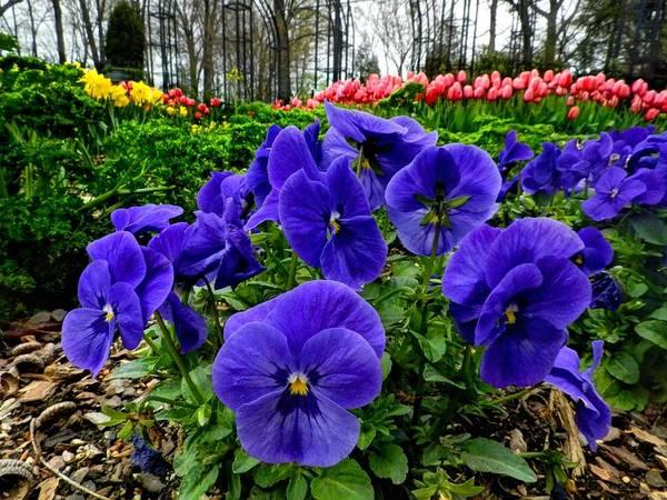 Photograph - Memphis - Dixon Gardens 003 by Lance Vaughn