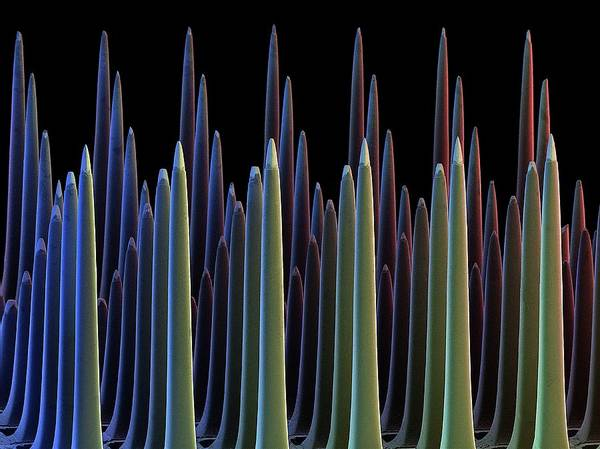Wall Art - Photograph - Mems Neural Interface Chip by David Scharf/science Photo Library