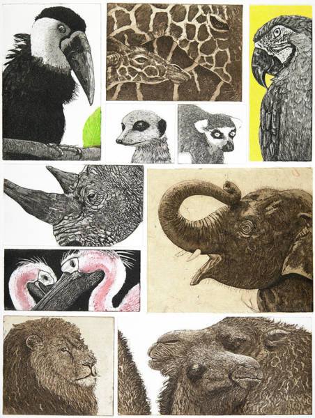 Flamingo Drawing - Menagerie,2014,(multiplate Etching/aquatint) by Jane Peart