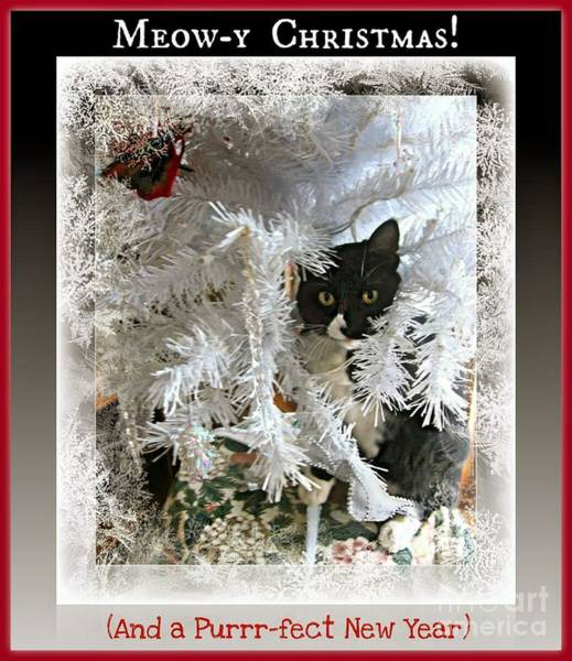 Fern Frost Photograph - Meowy Christmas Greetings From A Kitten by Fern Holm