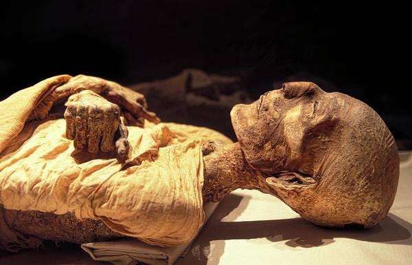 Wall Art - Photograph - Merneptah Mummy by Patrick Landmann/science Photo Library