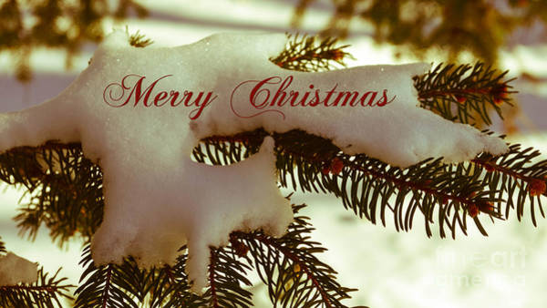 Photograph - Merry Christmas by Andrea Anderegg