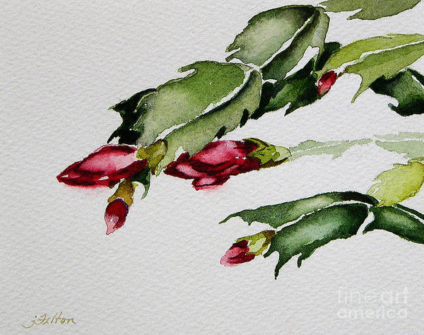 Merry Christmas Cactus 2013 Art Print