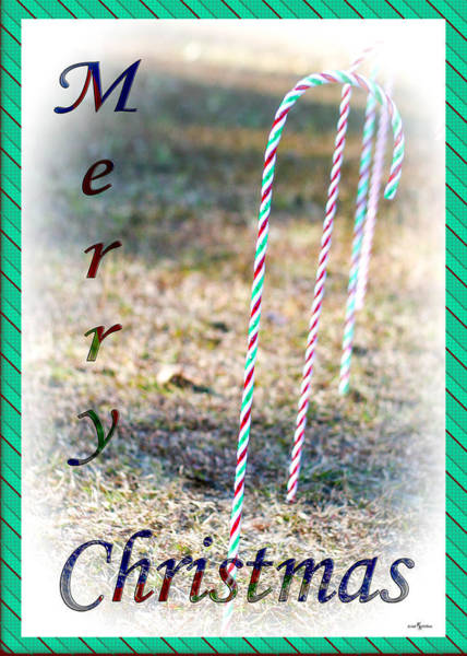 Wall Art - Photograph - Merry Christmas Canes by Mechala Matthews