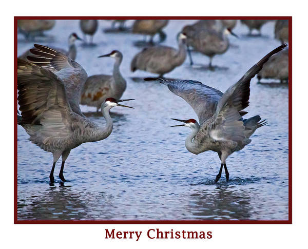 Photograph - Merry Christmas by Dorothy Cunningham