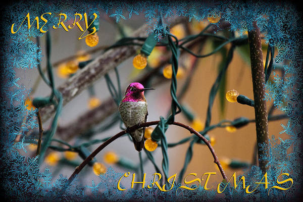 Photograph - Merry Christmas Hummer by Wes and Dotty Weber