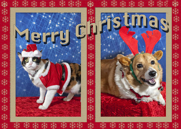Photograph - Merry Christmas by Melany Sarafis