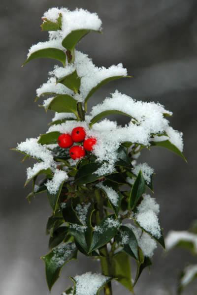 Photograph - Merry Christmas by Raymond Salani III