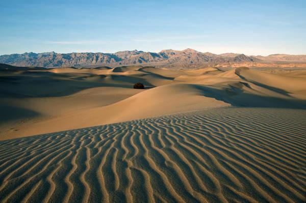 Photograph - Mesquite Dunes by Darren Bradley