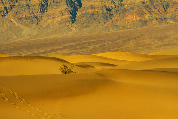 Death Valley Np Photograph - Mesquite Dunes by Kunal Mehra