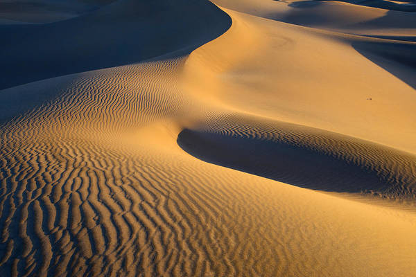 Photograph - Mesquite Dunes Sunrise by Mark Whitt