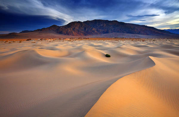 Death Valley Photograph - Mesquite Gold by Darren  White