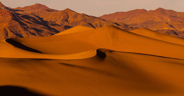 Death Valley Np Photograph - Mesquite by Kunal Mehra