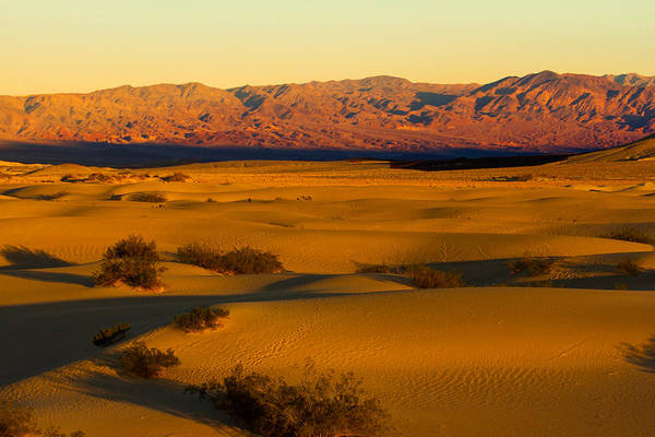 Death Valley Np Photograph - Mesquite Sunset by Kunal Mehra