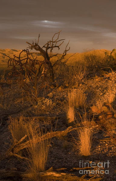 Photograph - Mesquite Tree Sunset by Chris Scroggins