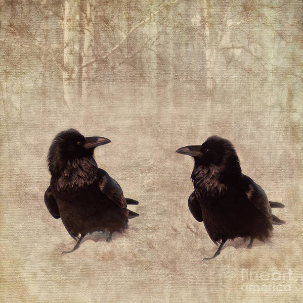 Two Birds Photograph - Messenger by Priska Wettstein