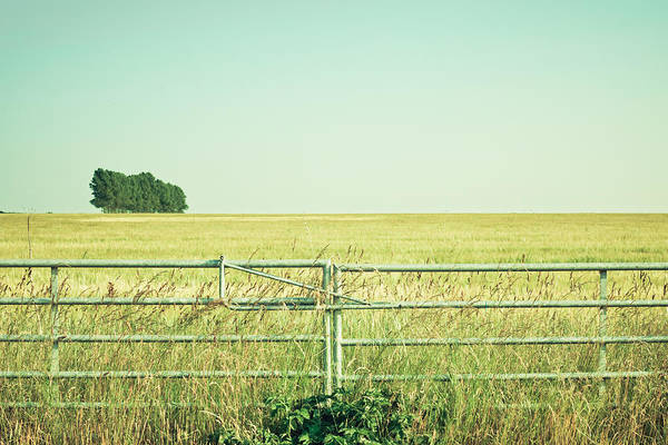 Idyll Photograph - Metal Gate by Tom Gowanlock