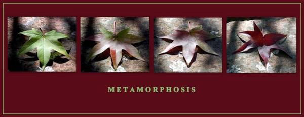 Photograph - Metamorphosis by AJ  Schibig