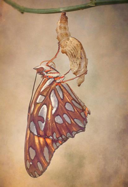 Gulf Fritillary Wall Art - Photograph - Metamorphosis by David and Carol Kelly