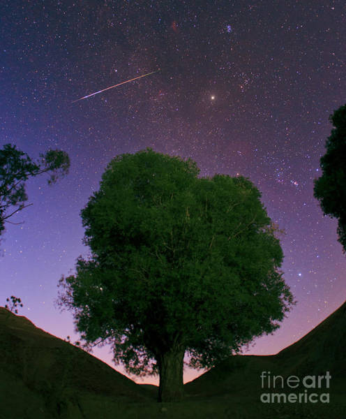 Photograph - Meteor In The Morning Sky by Babak Tafreshi