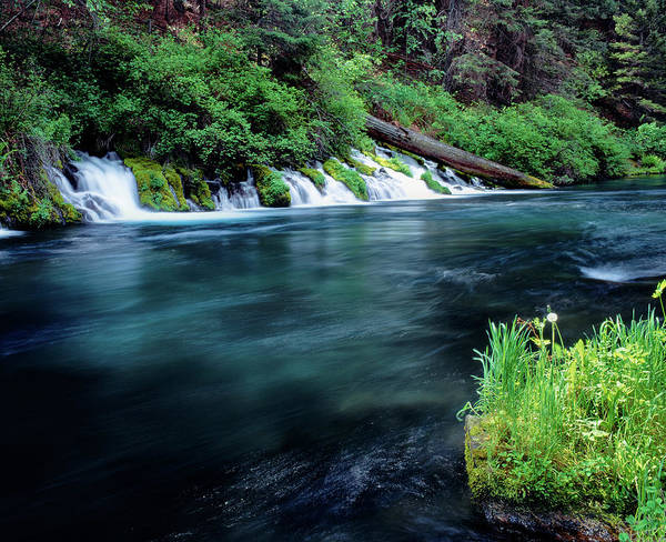 Sherman Photograph - Metolius River Near Camp Sherman by Panoramic Images