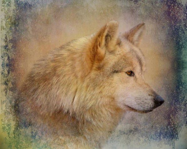 Wall Art - Photograph - Mexican Gray Wolf by Sandy Keeton