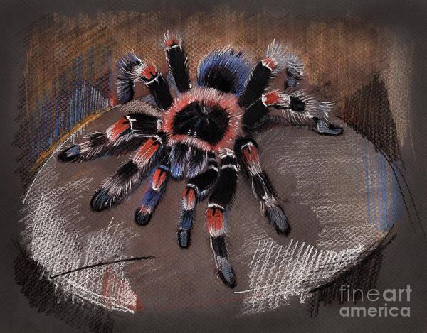 Mexican Redknee Tarantula Art Print