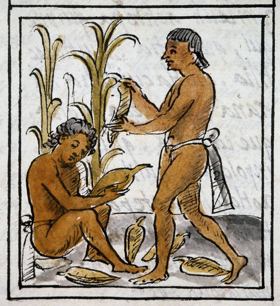 Indian Corn Drawing - Mexico Aztec Farmers by Granger