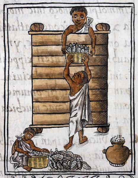 Indian Corn Drawing - Mexico Aztec Storage by Granger