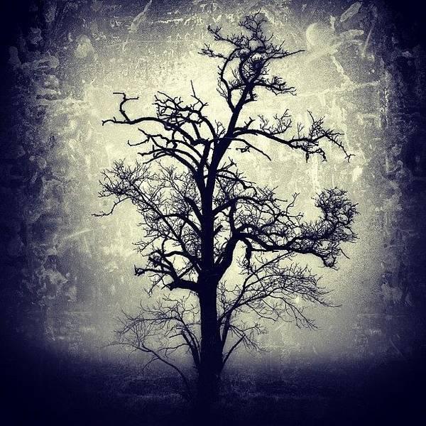 Tree Wall Art - Photograph - #mgmarts #all_shots #instahub by Marianna Mills