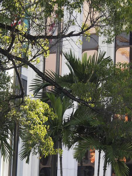 Photograph - Miami 29 by Karen Zuk Rosenblatt