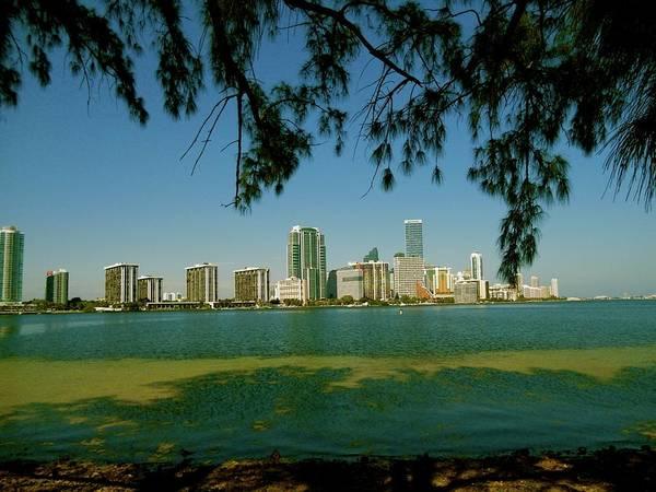 Photograph - Miami Skyline by Monique Wegmueller