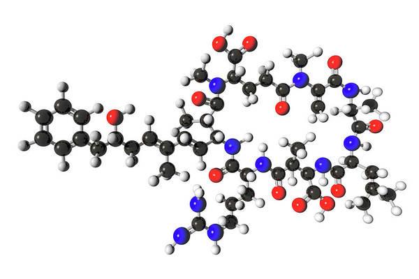 Molecular Wall Art - Photograph - Microcystin Molecular Model by Carol & Mike Werner