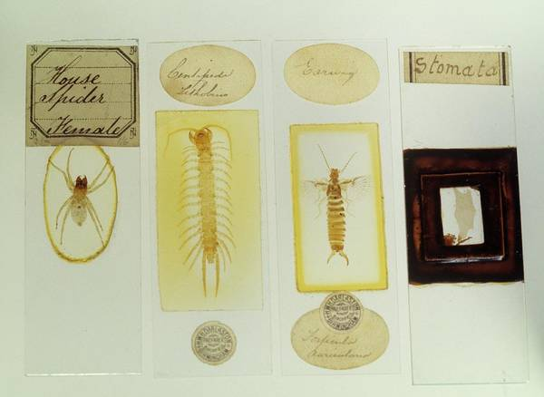 Slide Photograph - Microscope Slides by Science Photo Library