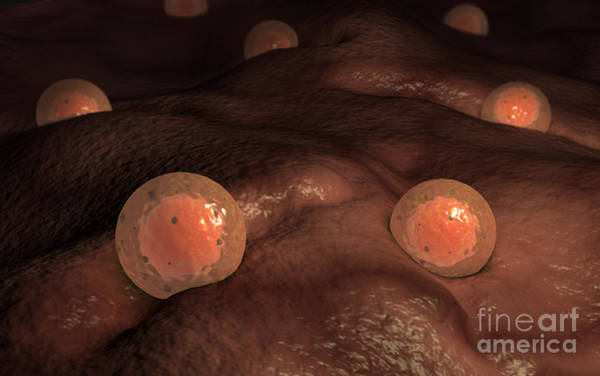 Digital Art - Microscopic View Of Ovules by Stocktrek Images