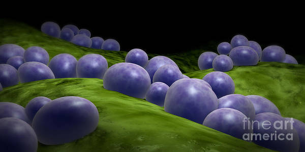 Digital Art - Microscopic View Of Staphylococcus by Stocktrek Images