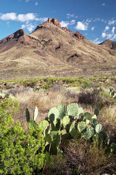 Chisos Mountains Photograph - Mid-altitude Desert by Bob Gibbons/science Photo Library