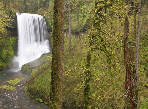 Silverton Photograph - Middle Falls, Silver Falls State Park by William Sutton