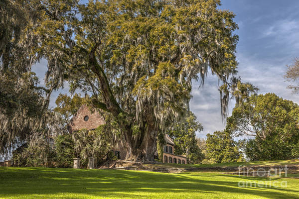 Photograph - Historic Middleton Place  by Dale Powell