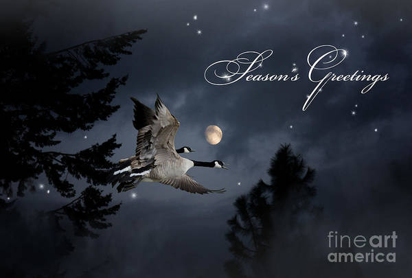 Photograph - Midnight Flight - Season Greetings by Beve Brown-Clark Photography