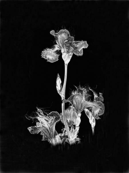 Photograph - Midnight Iris Bw by Ron White