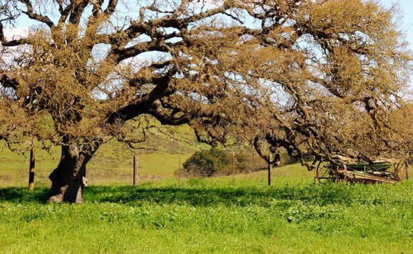 Photograph - Mighty Oak Meadow Wagon by Jeff Lowe