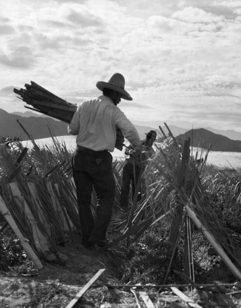 Indio Photograph - Migrant Farmers, 1935 by Granger
