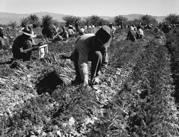 Wall Art - Photograph - Migrant Workers, 1937 by Granger