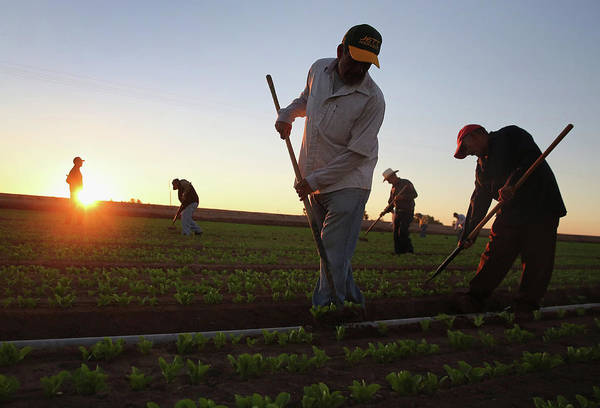 Photograph - Migrant Workers Farm Crops In Southern by John Moore
